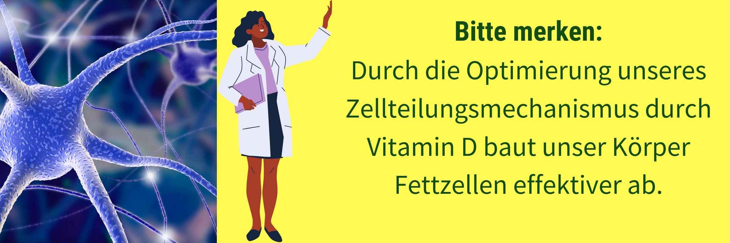 Vitamin D Einfluss Zellteilung