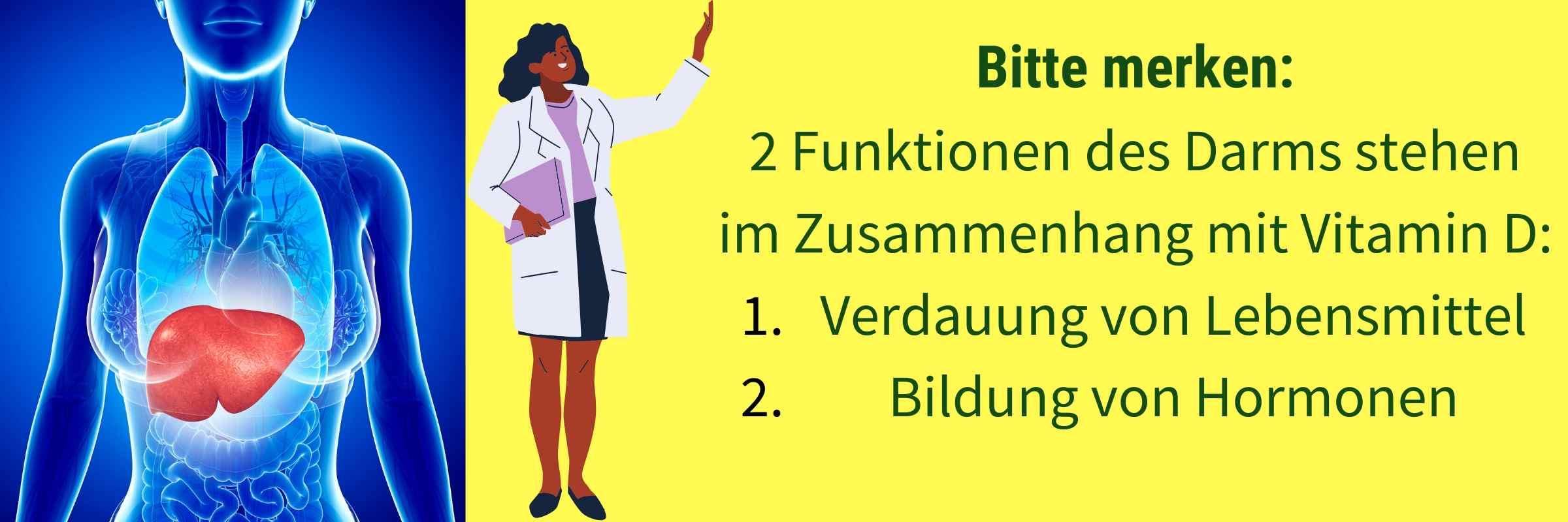 Funktionen Darm Vitamin D