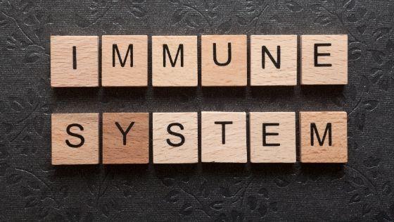 Titelbild Immunsystem