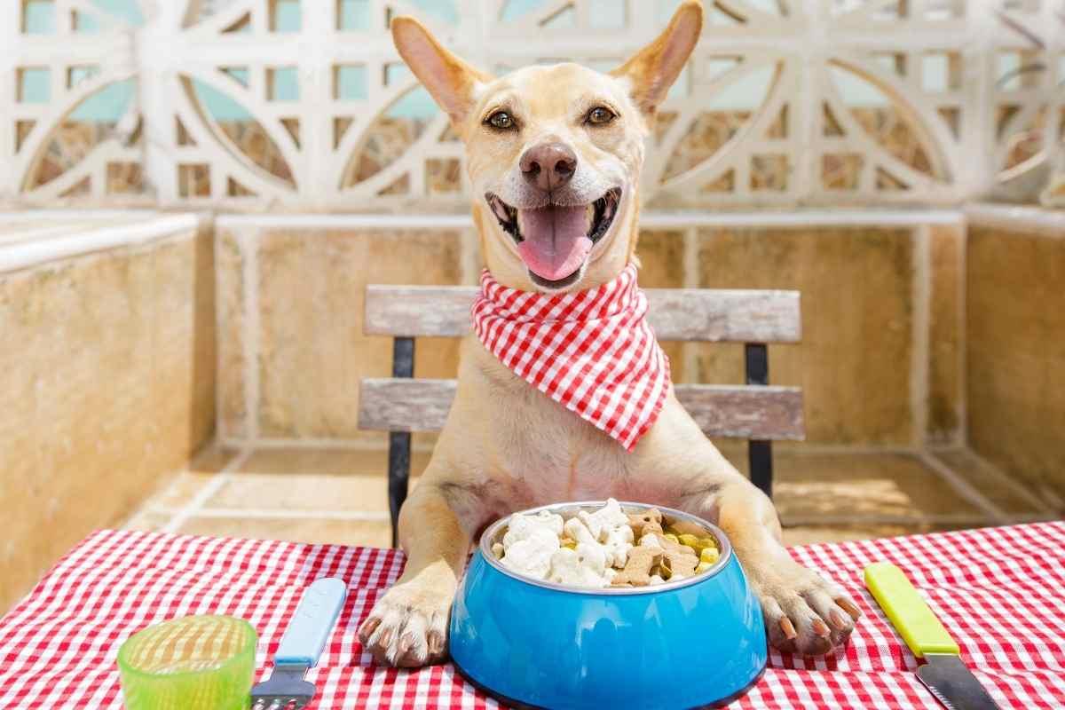 Hunde essen Vitamine